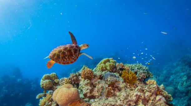 Great Barrier Reef and Rafting Tour Package Cairns