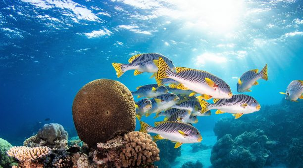 Cairns Tour Package includes Great Barrier Reef Reef, White Water Rafting and Bungy (2 Days)