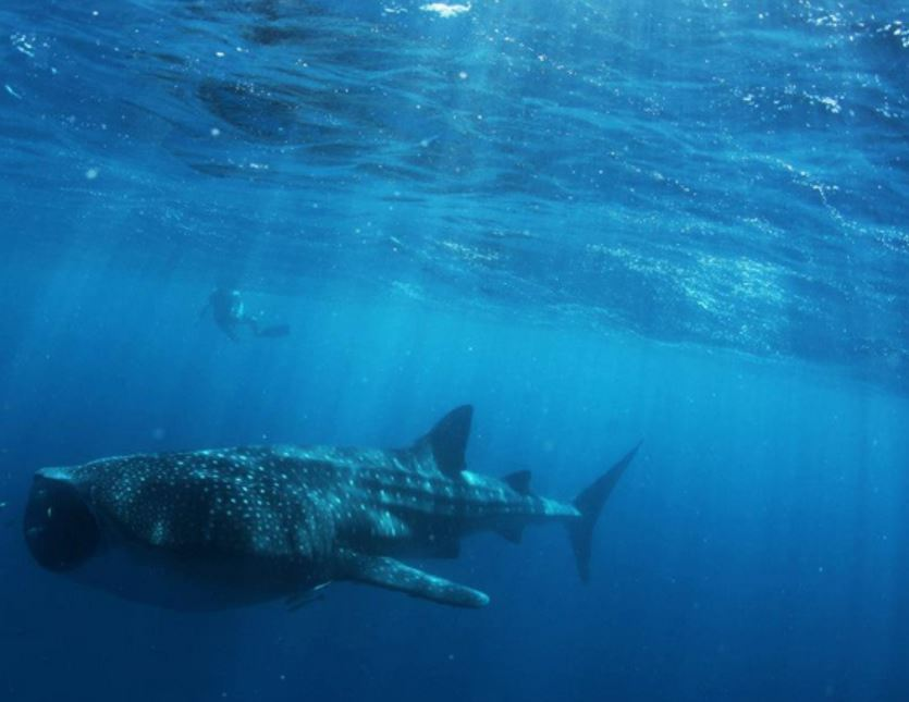 Ningaloo reef australia dive - Ningaloo reef dive ...