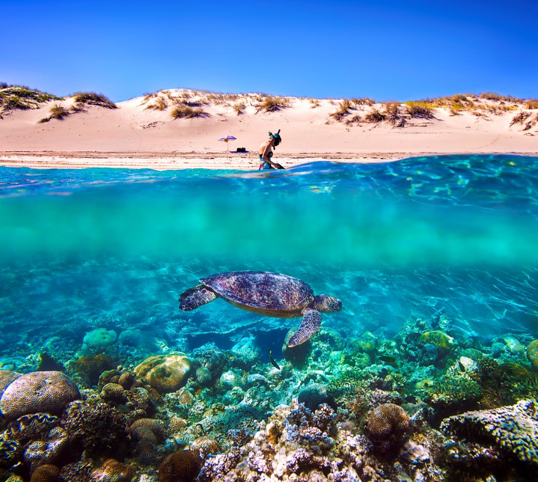 visit exmouth and the Ningaloo Reef to see whale sharks and more