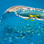 Dive Australia