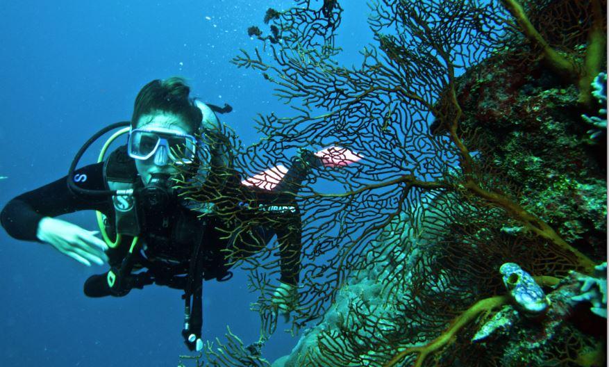 Australia Dive